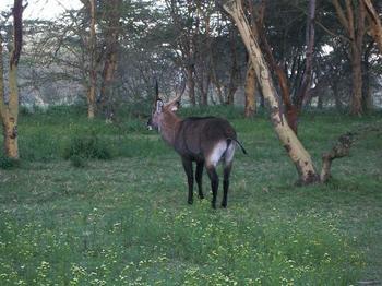 Naivasha4.jpg